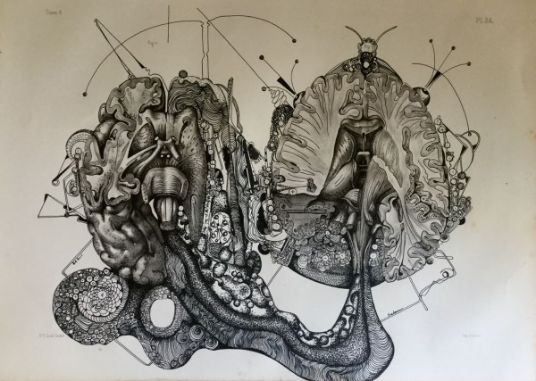 Gravure cerveau 2, drawing, rotring on engraving, Frédéric Babon, artcompulsion, Outsider art
